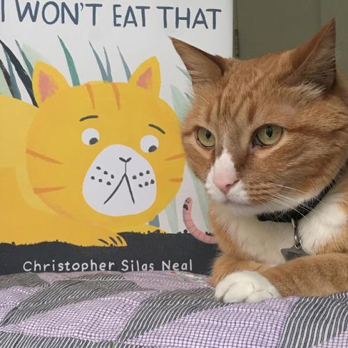 Cat Wants Food But Won T Eat
